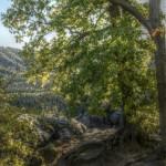 Entspannte Wanderung zum Kuhstall auf dem Neuen Wildenstein